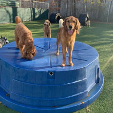 Dog Daycare Fort Wayne IN